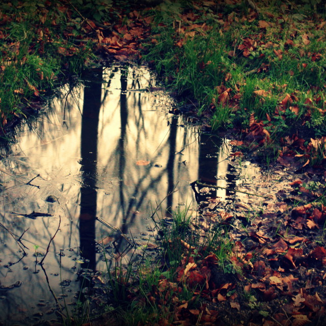 """Forest reflection"" stock image"