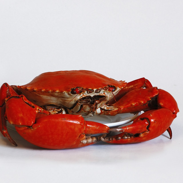 """DSC_4727- Red Crab"" stock image"
