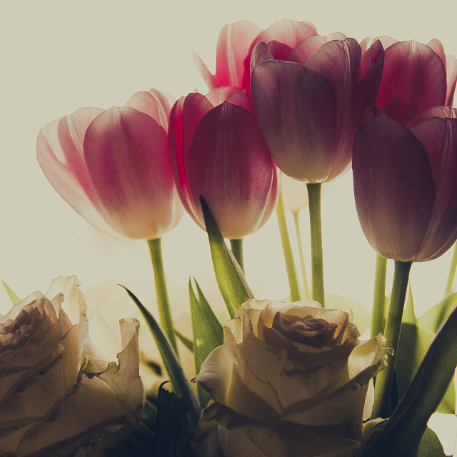 """""""roses and tulips"""" stock image"""