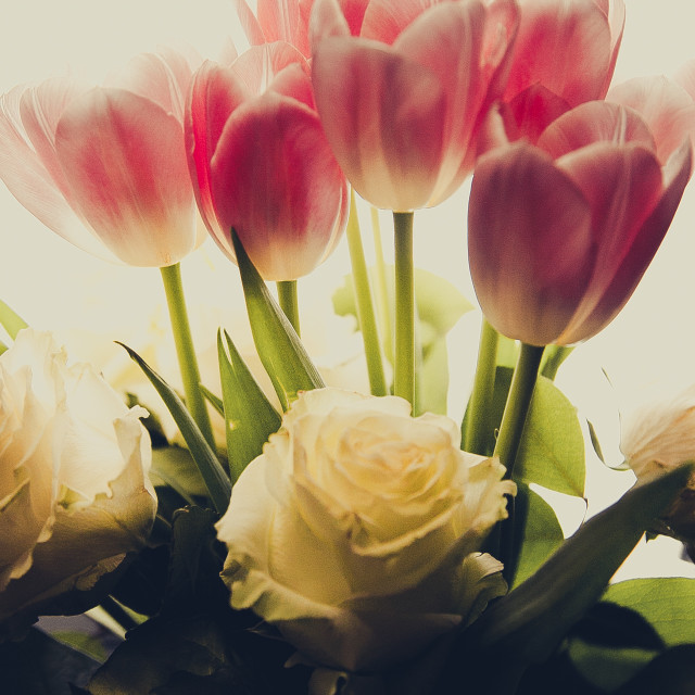 """roses and tulips"" stock image"