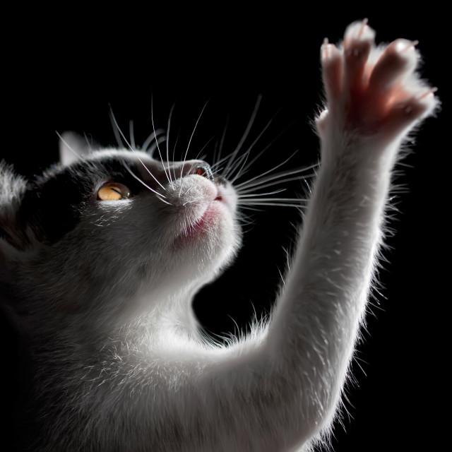"""""""Cat on black background"""" stock image"""