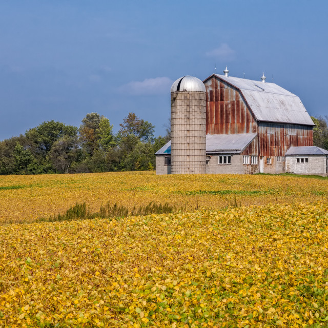 """""""Nearing Harvest Time"""" stock image"""
