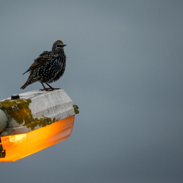 """""""Morning Bird"""" stock image"""