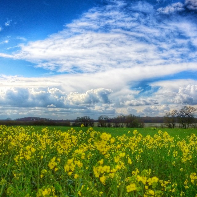"""Flowers Blooming"" stock image"