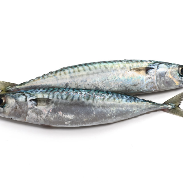 """two mackerel"" stock image"