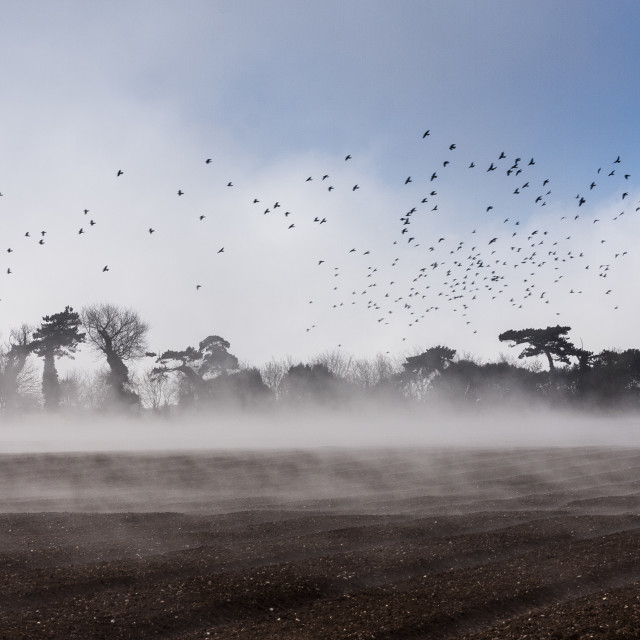 """Mist and Birds"" stock image"