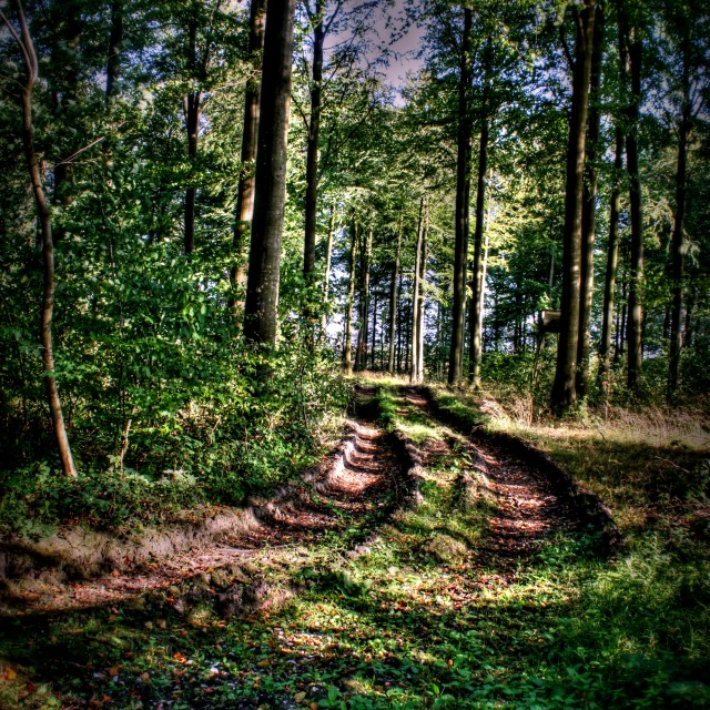 """""""Forest Path"""" stock image"""