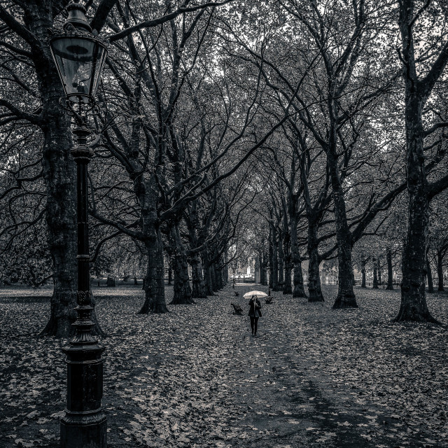 """""""Lady with umbrella in Green Park London"""" stock image"""