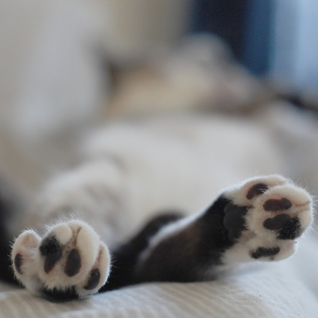 """Paws"" stock image"