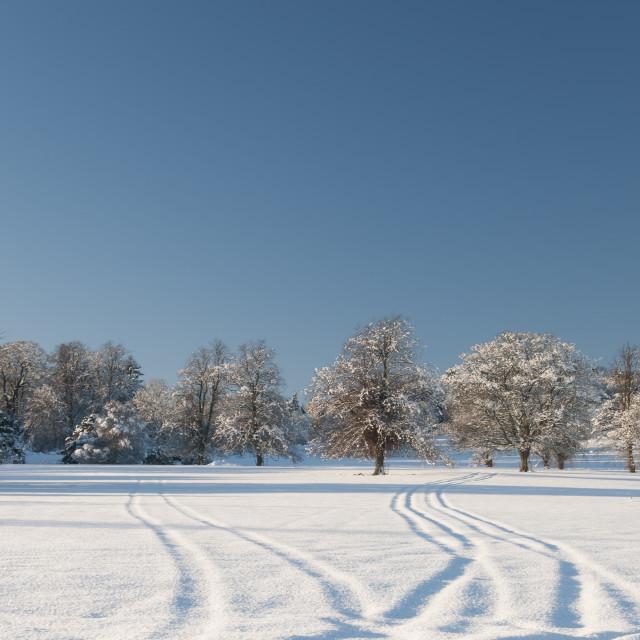 """Winter Wonderland!"" stock image"