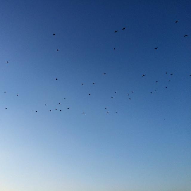 """Birds over Budapest"" stock image"