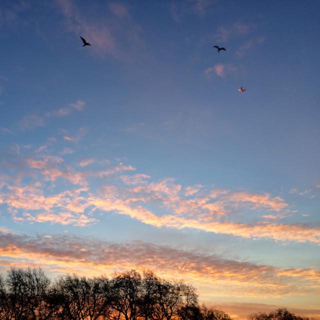 """Birds in Evening Sky"" stock image"