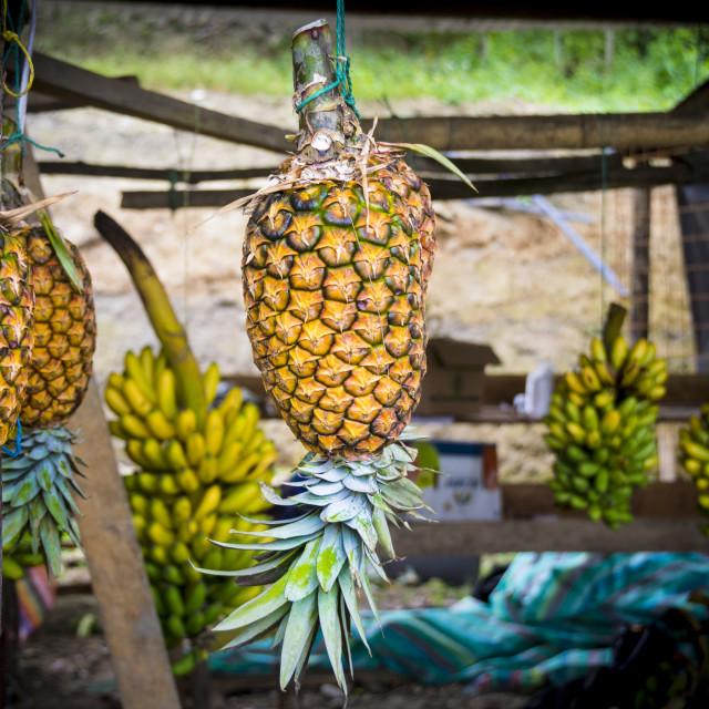 """Fresh pineapples hanging"" stock image"