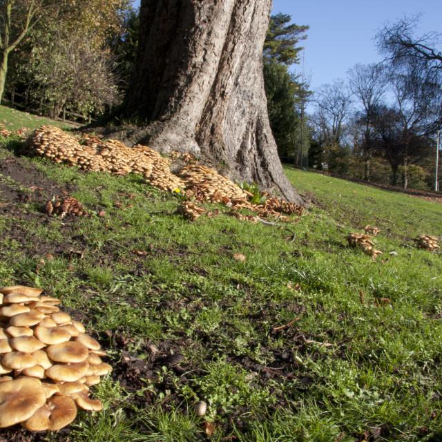 """""""Fungi landscape"""" stock image"""
