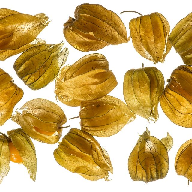 """""""Physalis Fruit"""" stock image"""