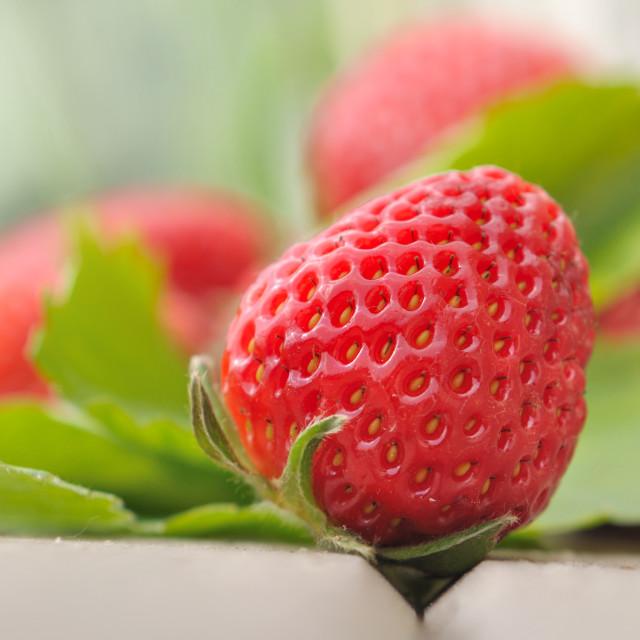 """""""beautiful strawberry"""" stock image"""