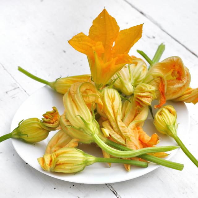 """""""zucchini flowers"""" stock image"""