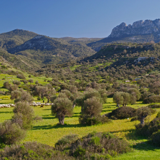"""Springtime in Cyprus"" stock image"