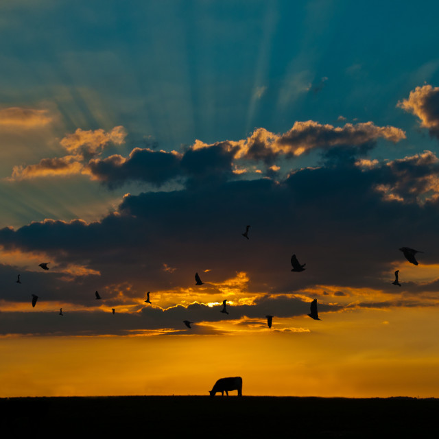 """""""Sun setting over a field"""" stock image"""