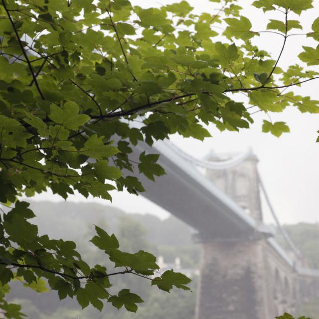 """""""Menai Bridge through Trees"""" stock image"""