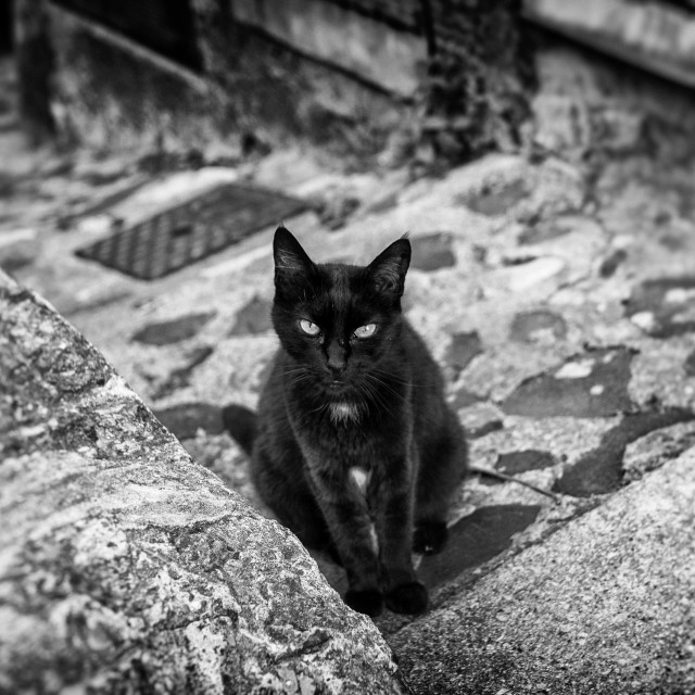 """""""Black Cat Sitting on a Step"""" stock image"""