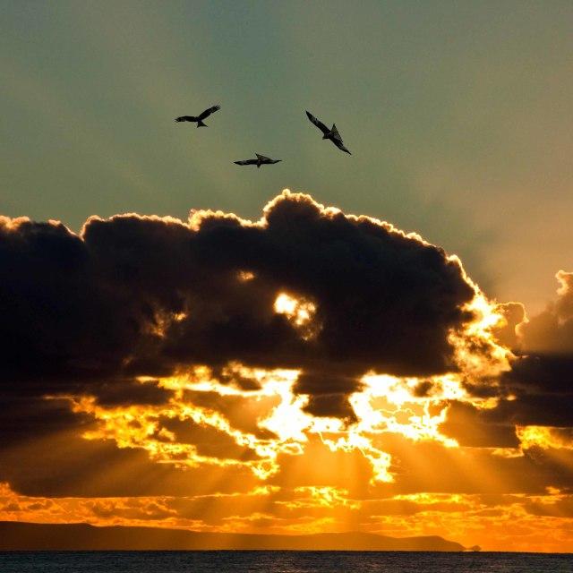 """Silhouette of sea gulls against a setting sun."" stock image"