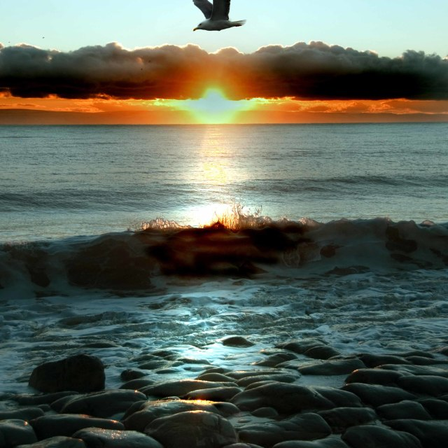 """""""Silhouete of seagull flying against the setting sun background"""" stock image"""
