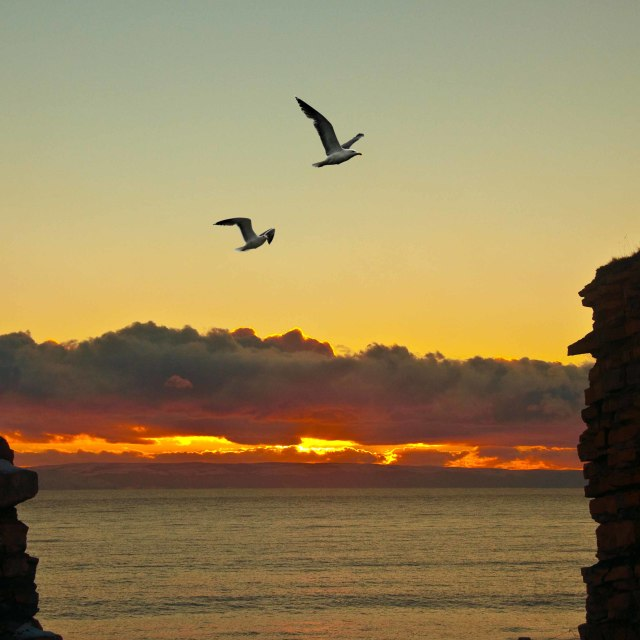 """Silhouette of sea gulls agains a setting sun."" stock image"