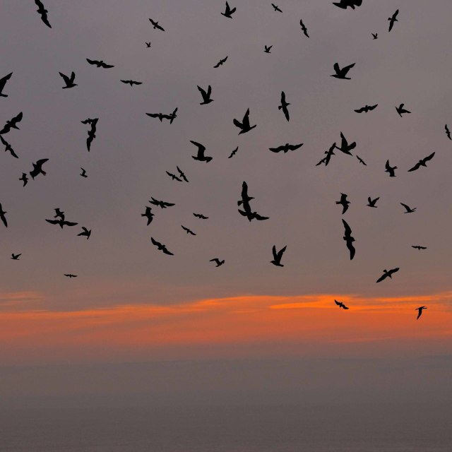 """Flock of seagulls against a setting sun"" stock image"