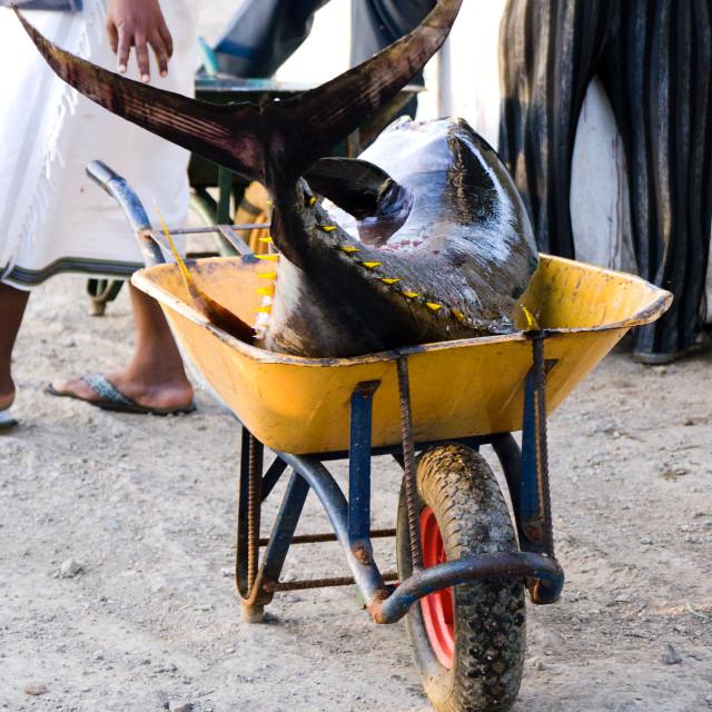 """Fish barrow"" stock image"