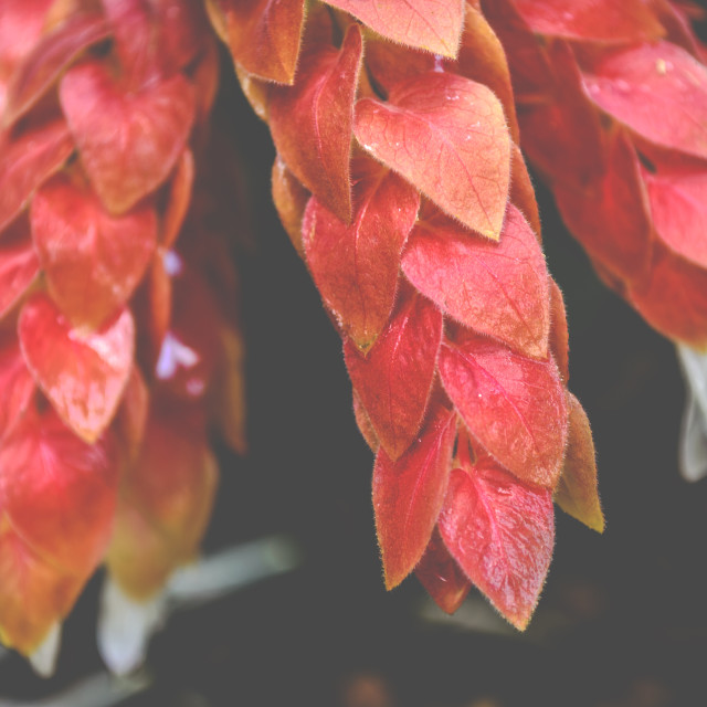 """Coloured Leaves"" stock image"