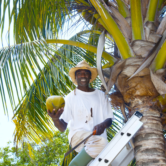 """Man with a coconut"" stock image"