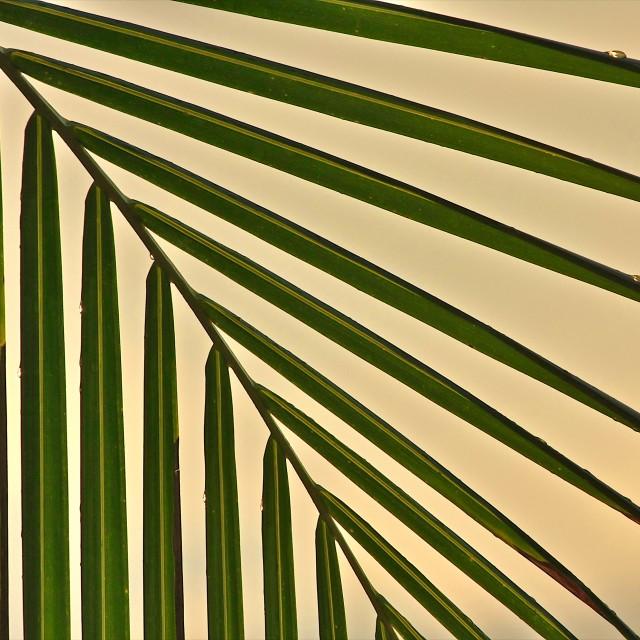 """Palm"" stock image"