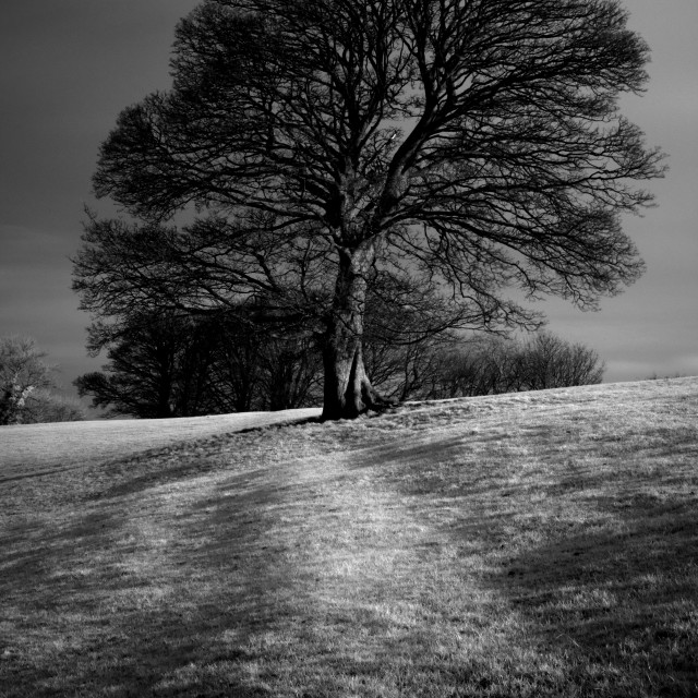 """""""Tree Shaped by the Wind"""" stock image"""
