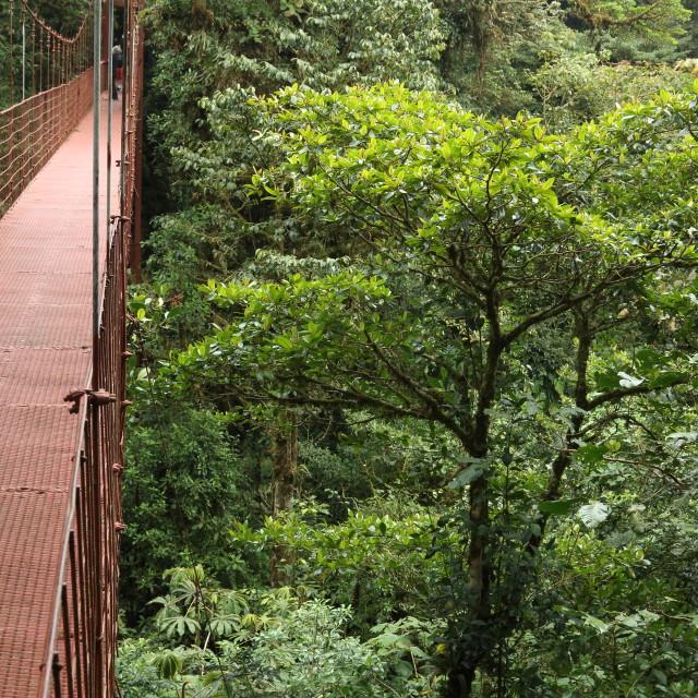 """Suspension bridge, Monteverde Biological Reserve, Costa Rica."" stock image"