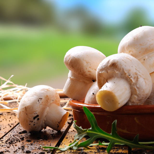 """""""Freshly picked mushrooms on a table"""" stock image"""