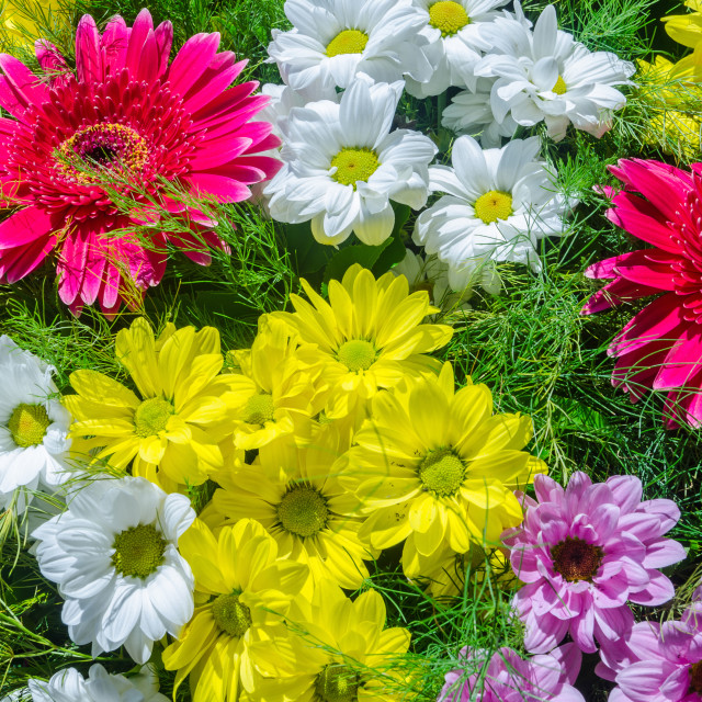 """""""Floral Beauty"""" stock image"""