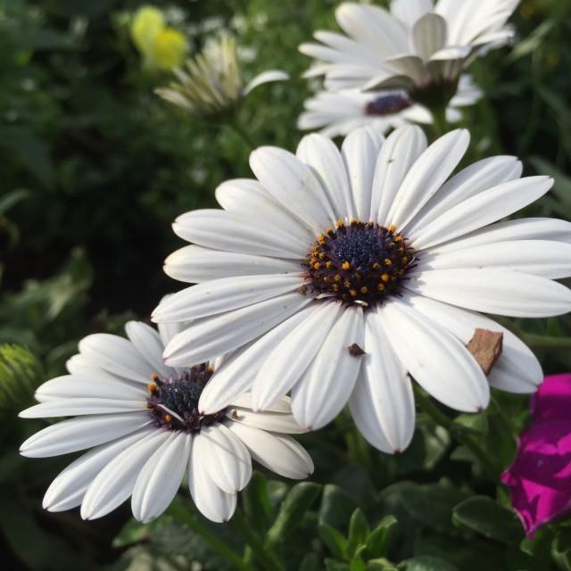 """""""White Flower"""" stock image"""