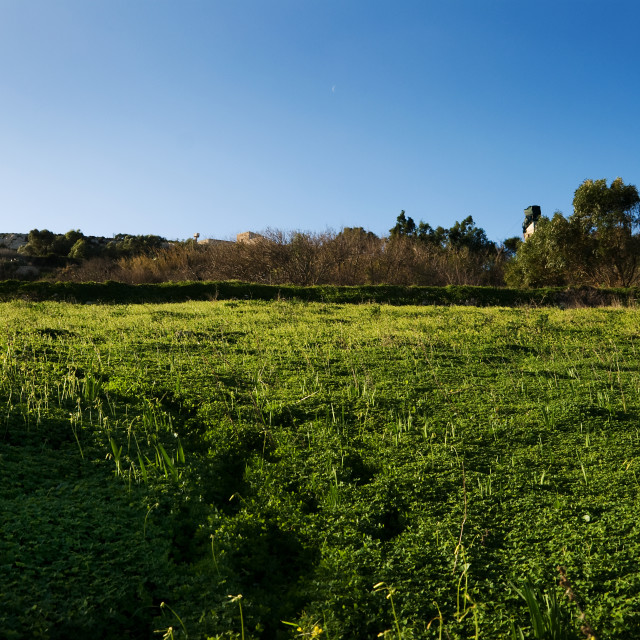 """""""Green fields and blue sky"""" stock image"""