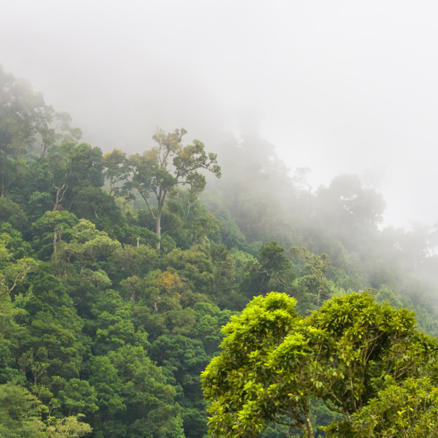 """""""Cloud forest Costa Rica"""" stock image"""