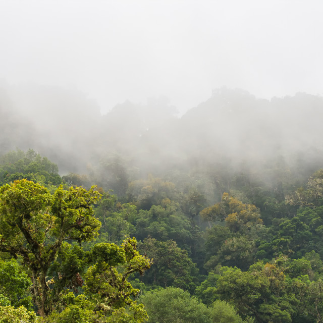 """Cloud forest Costa Rica"" stock image"