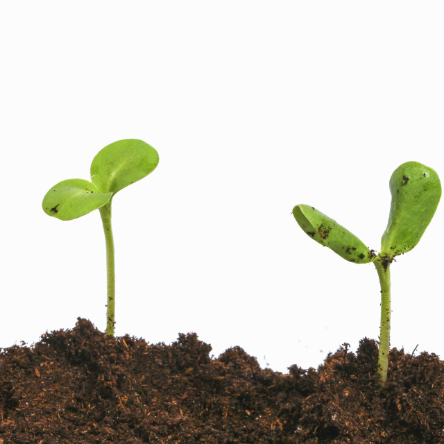 """""""Young plants"""" stock image"""