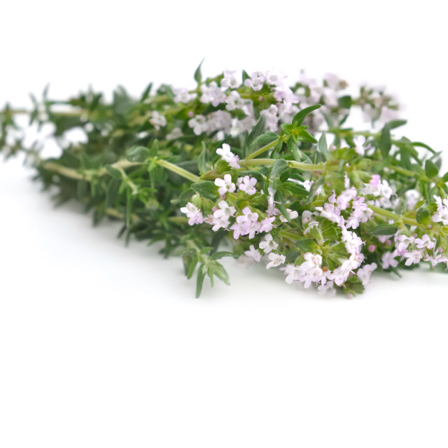 """bouquet of thyme"" stock image"