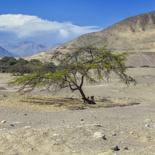 """""""Tree in desert"""" stock image"""