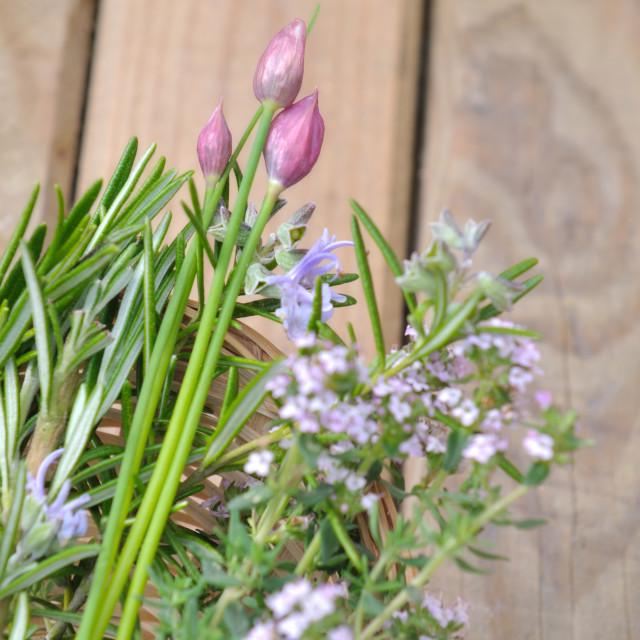 """aromatic flowering plants"" stock image"