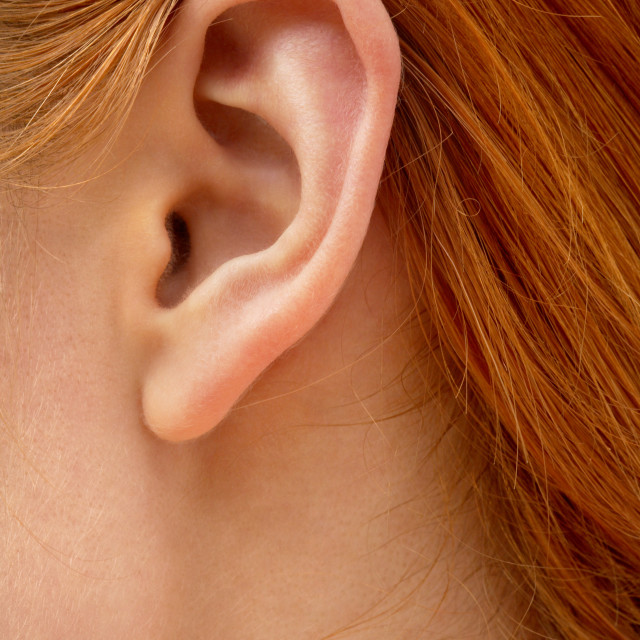 """""""ear of redhead lady"""" stock image"""