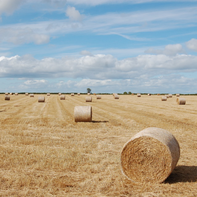 """Straw bales under a Cotswold sky"" stock image"