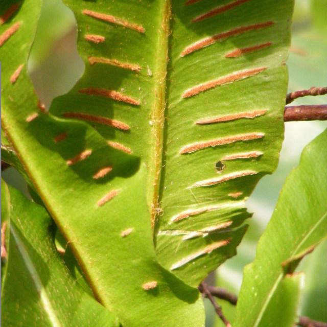 """fern"" stock image"
