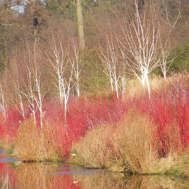 """lakeside winter colour"" stock image"