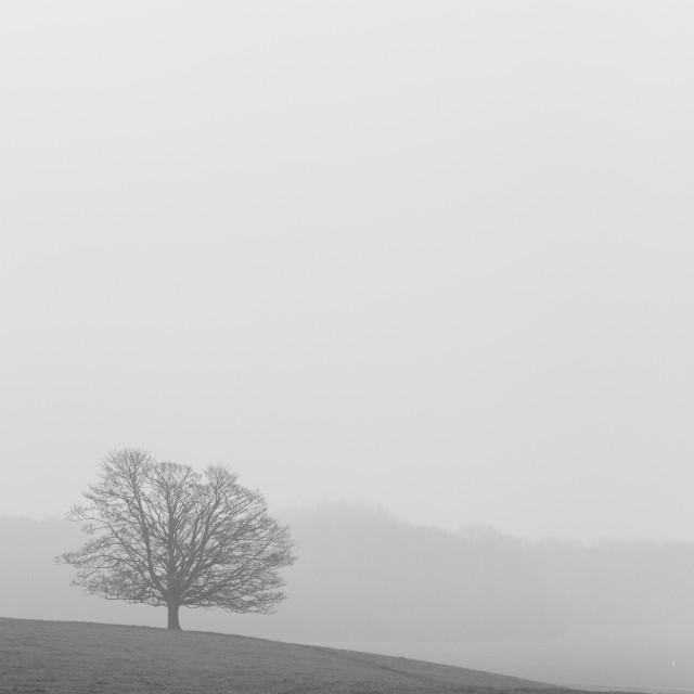 """""""Lone Tree in Misty Landscape"""" stock image"""